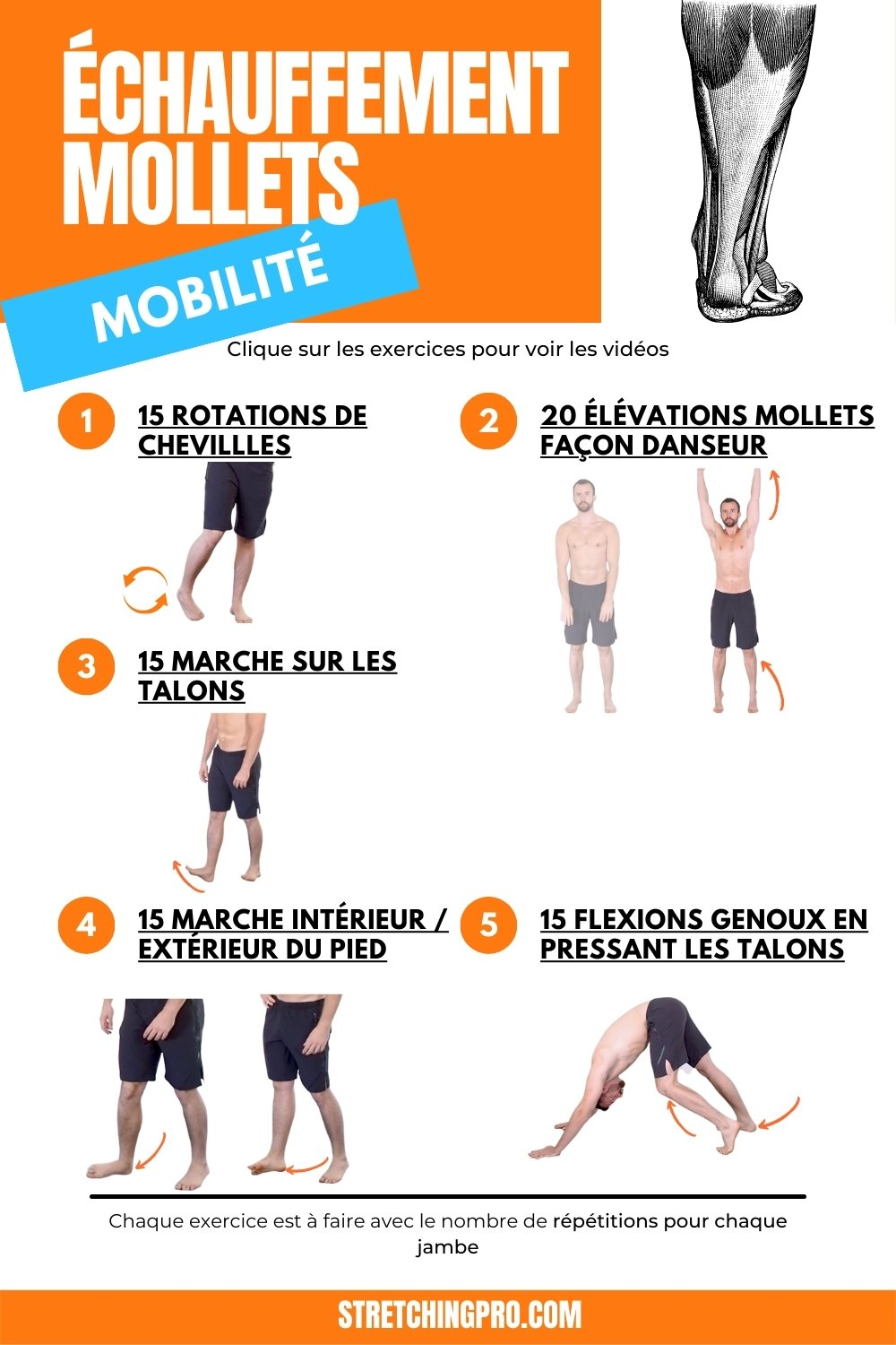 stretchingpro-etirements-mollets-exercices-echauffements-img