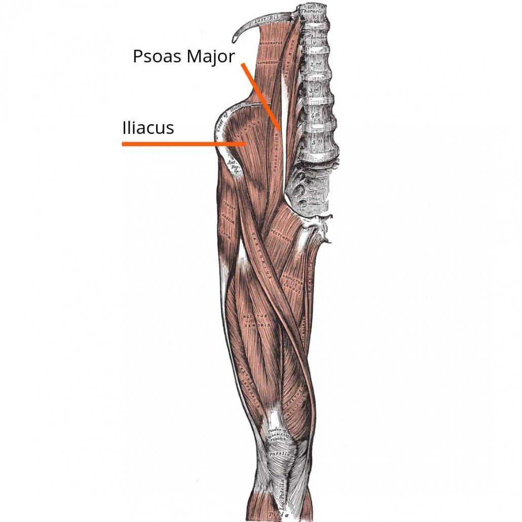 stretchingpro-etirements-psoas-anatomie