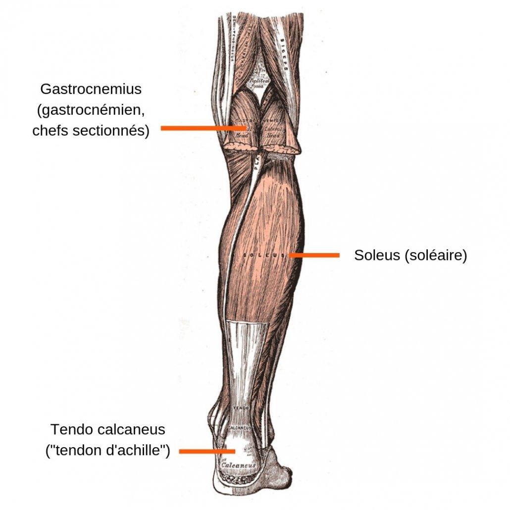 stretchingpro-etirements-mollets-tricepssural-gastrocnemius-soleus