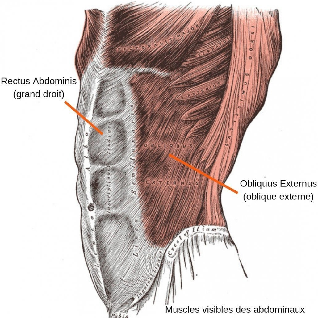 stretchingpro-etirements-abdominaux-muscles-visibles