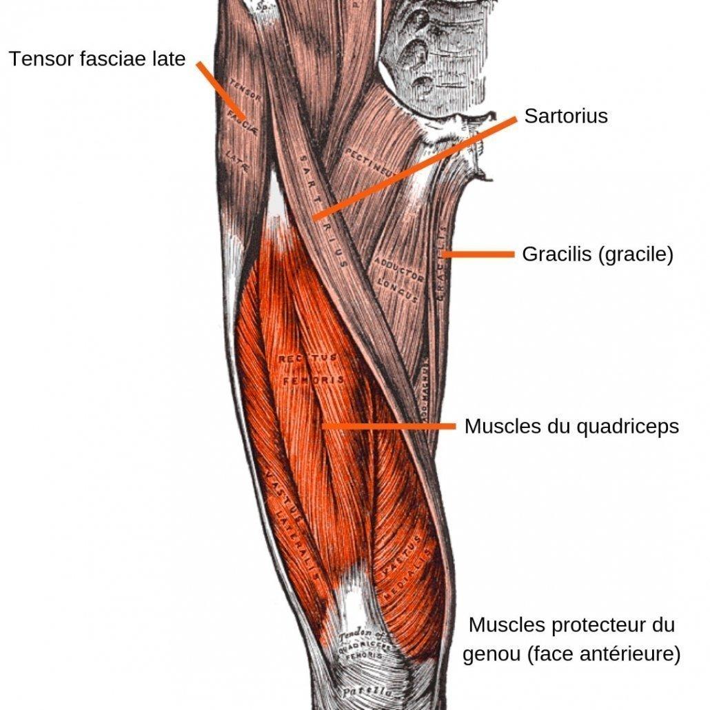 stretchingpro-etirements-genoux-muslces-anterieurs