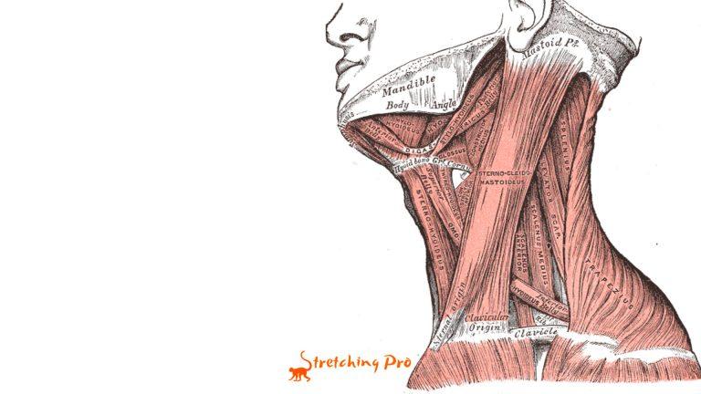 stretchingpro-hernie-cervicale