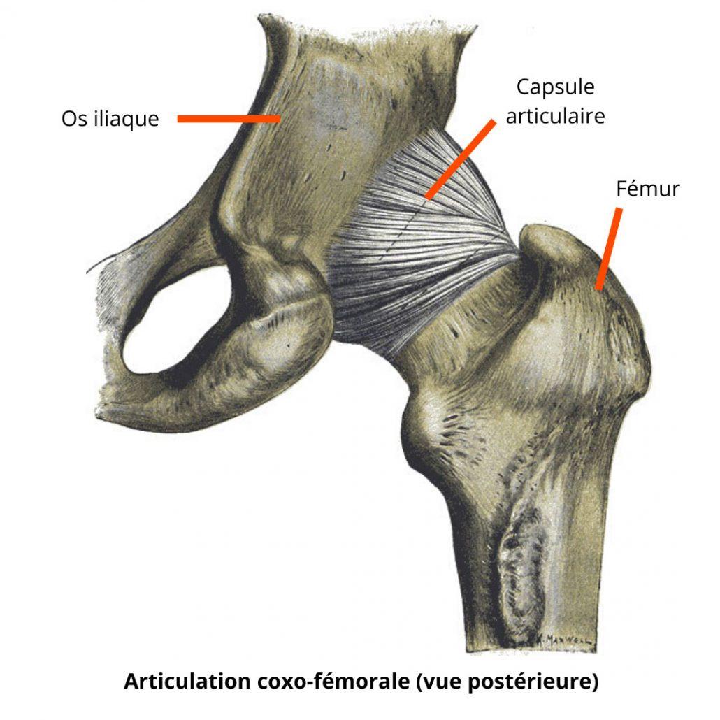 stretchingpro-mobilite-hanche-articulation-coxo-femorale