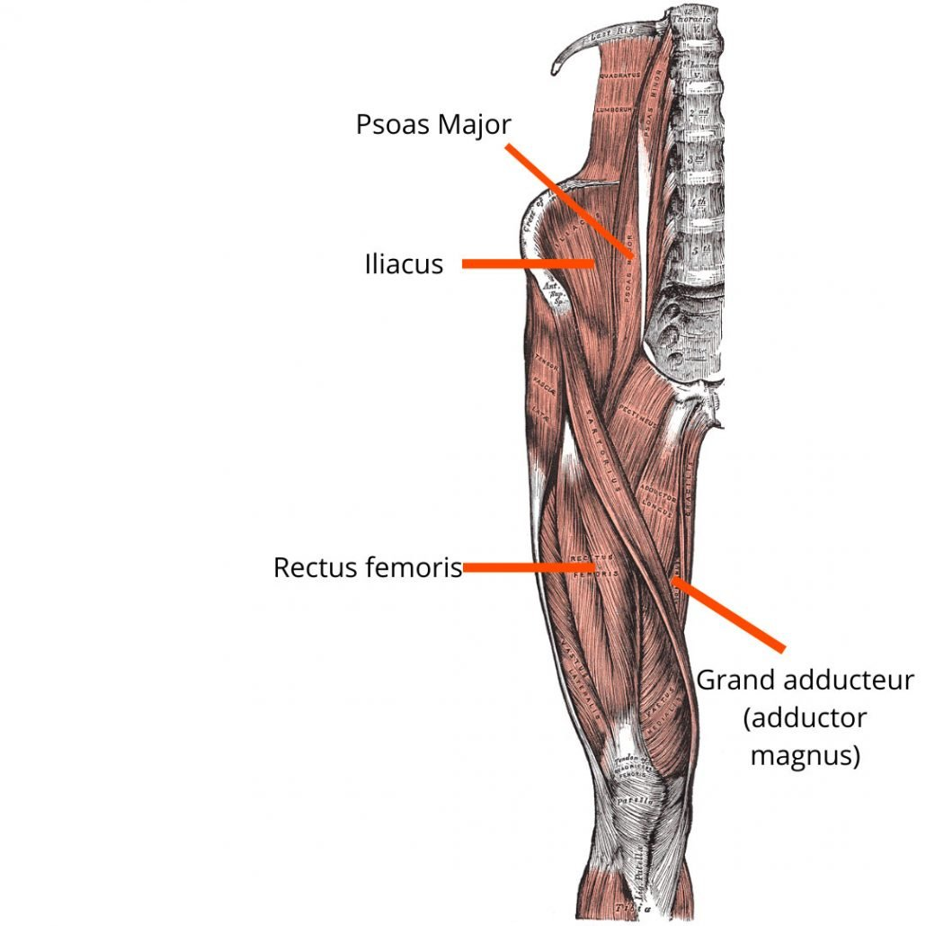 stretchingpro-muscles-avant-bassin