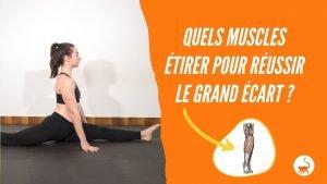 stretchingpro-quels-muscles-etirer-reussir-grand-ecart-image