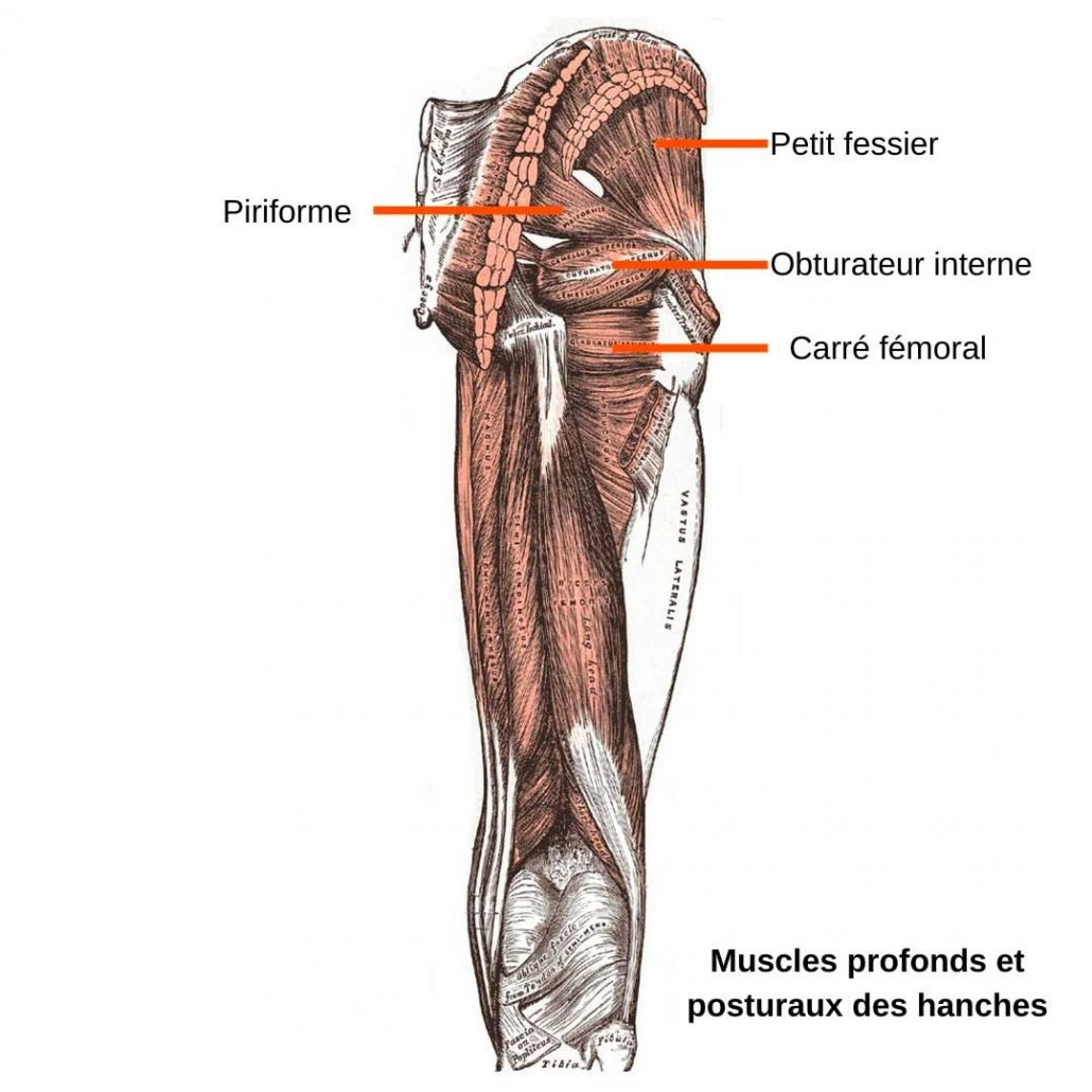 stretchingpro-etirement-musculation-fessier-muscles-profonds-hanches