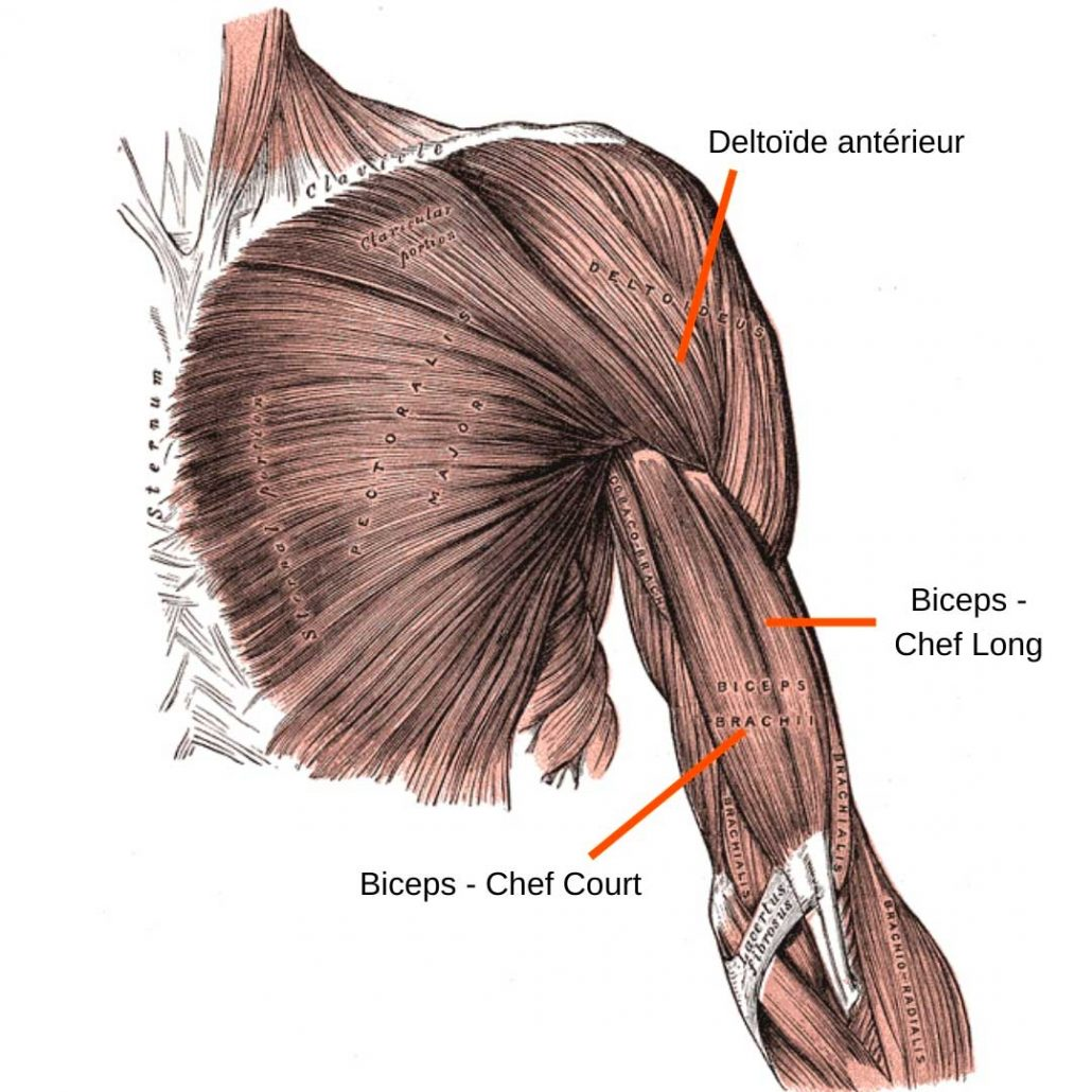 stretchingpro-etirement-musculation-haut-corps-biceps-deltoide-anterieur