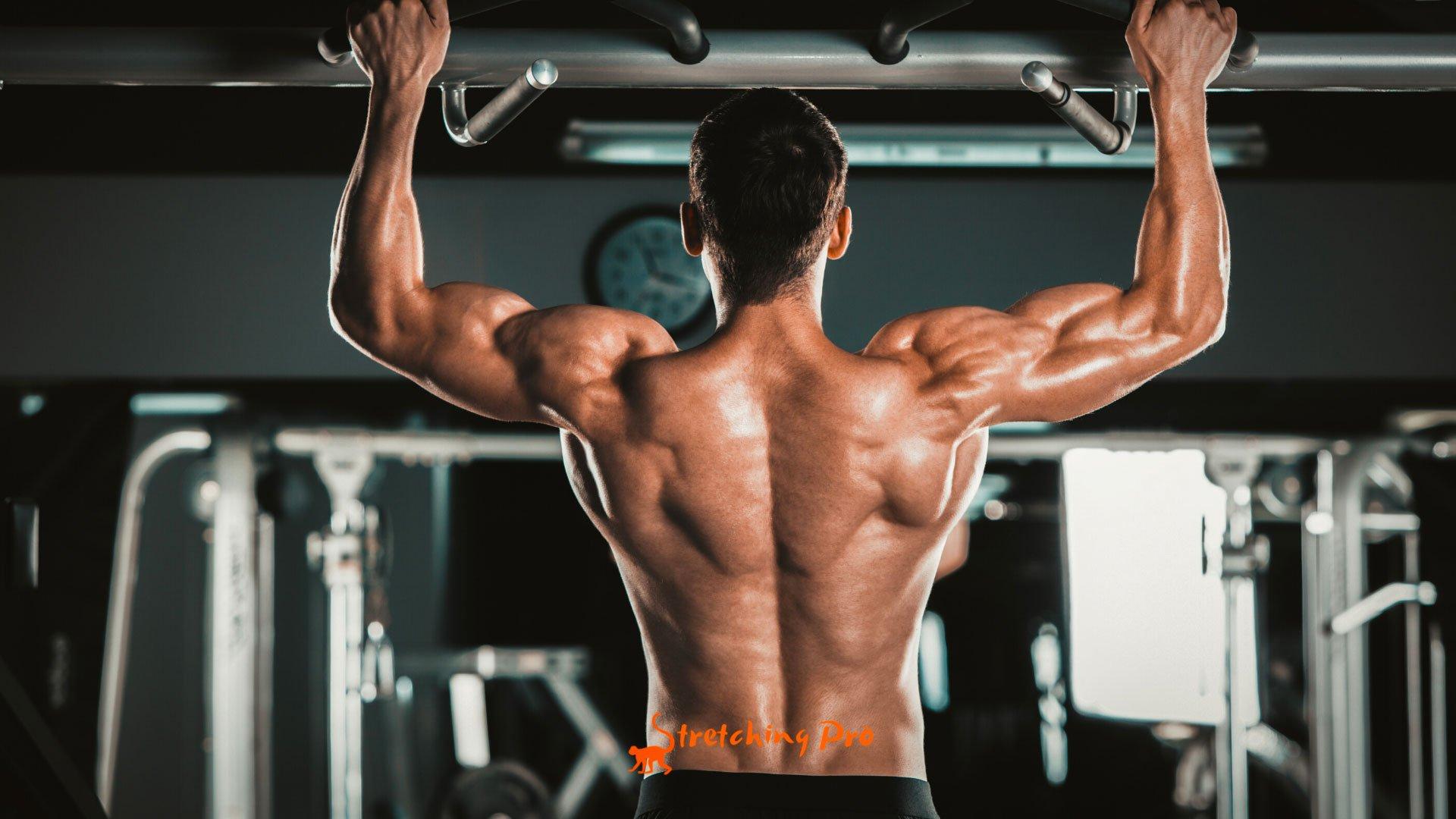 stretchingpro-etirements-musculation-dorsaux