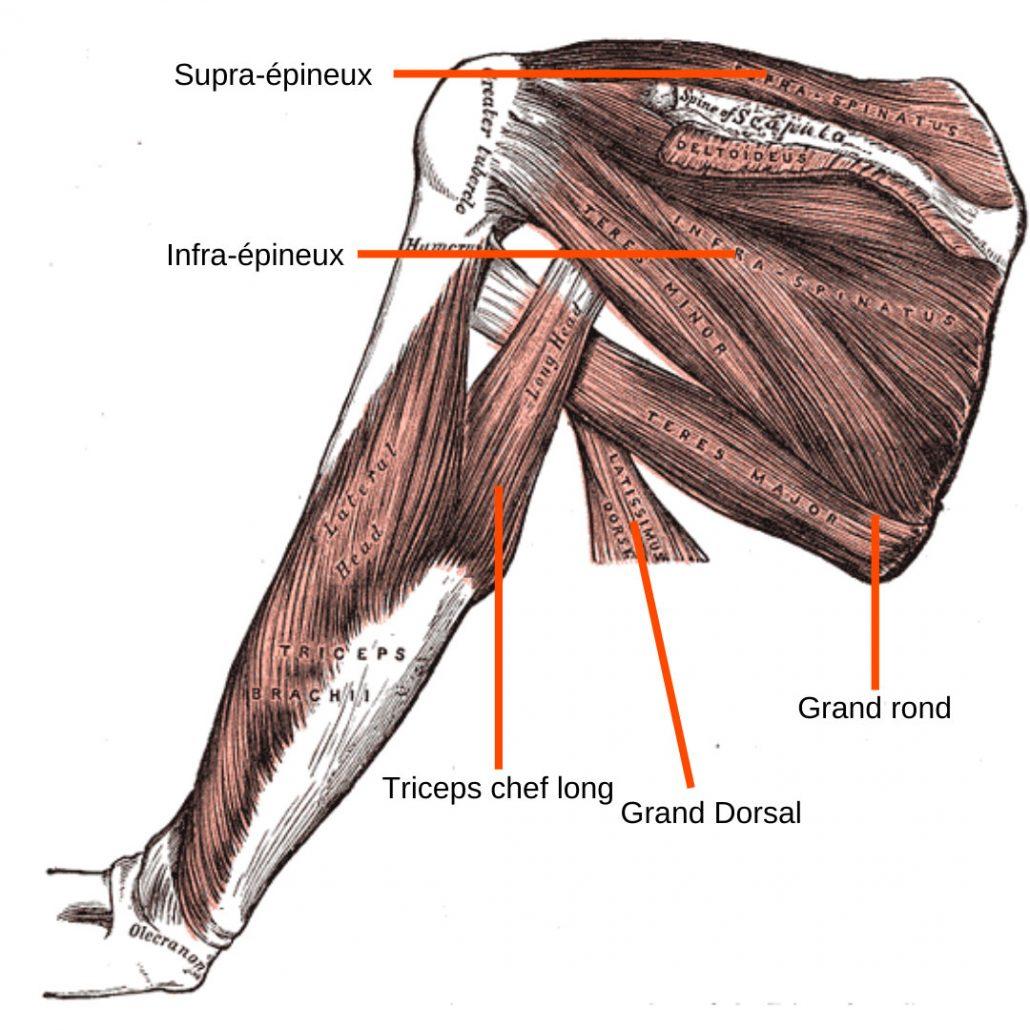 stretchingpro-etirement-epaule-musculation-2