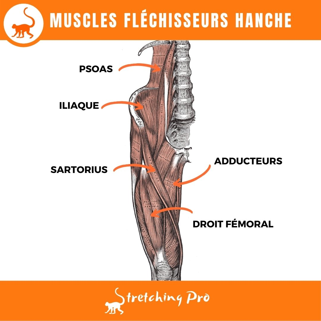 stretchingpro-etirement-flechisseurs-hanche-muscles